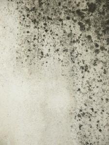 grunge moldy walls